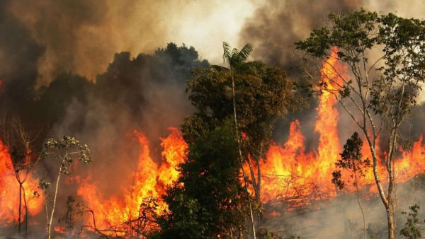 Social media outrage over Amazon forest fire