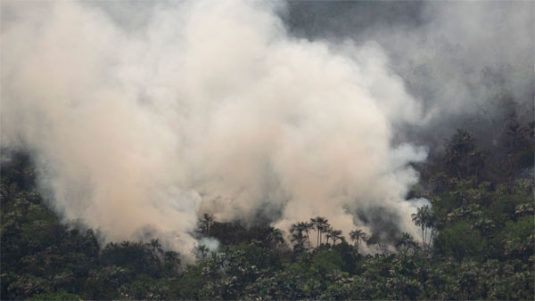 Fires across the Brazilian Amazon have sparked an international outcry for preservation of the worlds largest rainforest.