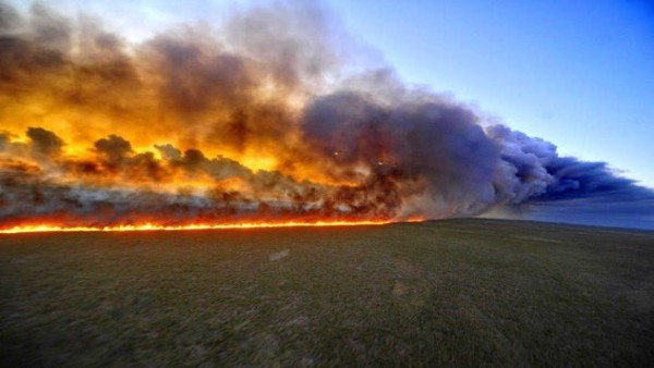 Brazil rejects G7 funding to tackle Amazon fires, says reforest Europe