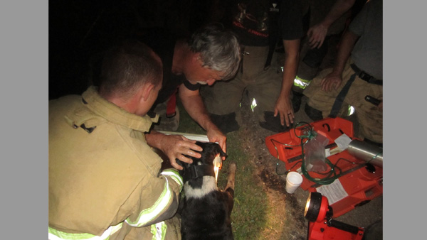 Hero dog save humans by alerting to house fire