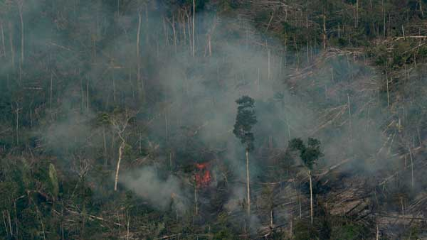 Amazon fires: Brazil rejects aid offered by G7 to fight forest blaze, say reports