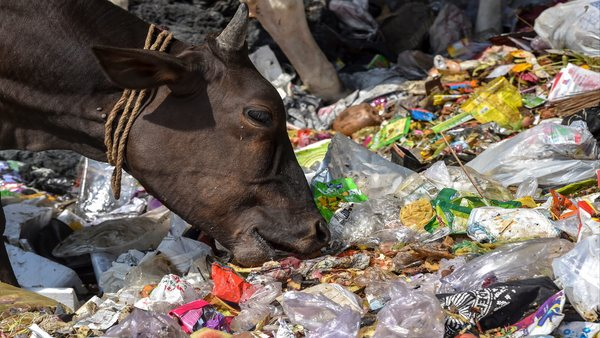 Not only humans, plastic poses threat to even animals