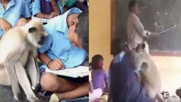 Video of langur studying with kids at school in Andhra Pradesh goes viral