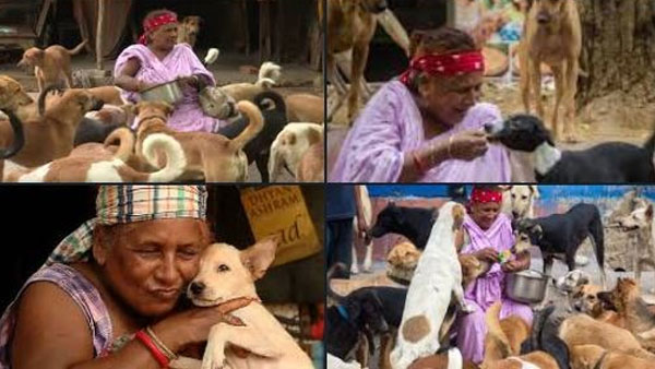 Scavenger to dog lady: Meet Pratima Devi, who feeds 400 dogs a day