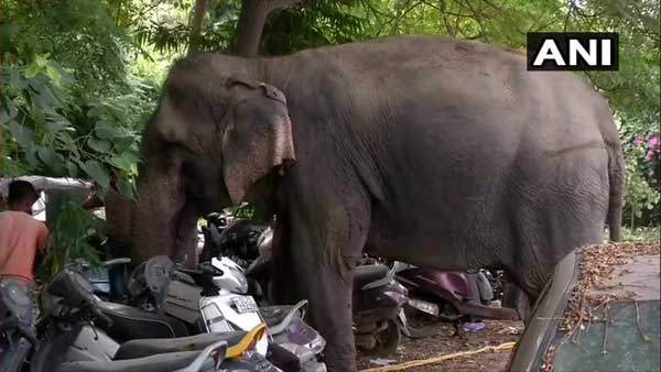 'Missing' Delhi elephant Laxmi found, mahout Saddam arrested after two months on the run