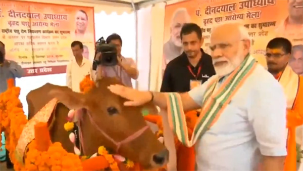 PM Modi adores a cow during the launching event of NADCP