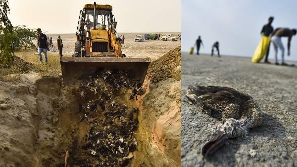Nearly 17,000 migratory birds dead in Rajasthan's Sambhar lake