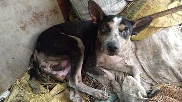 WB: Pregnant dog burnt alive along with her 2 puppies in Burdwan