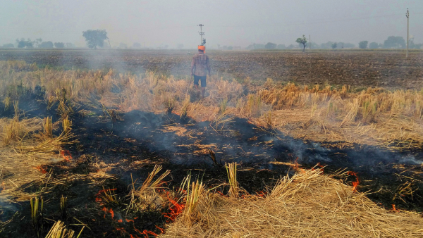 Stubble burning: 25 pc jump in Punjab; marginal drop in Haryana as compared to last year