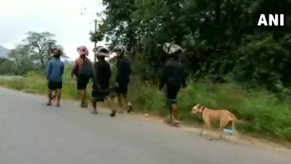 True devotee! Stray dog walks 480 km following 13 devotees to Sabarimala