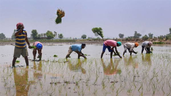 Centre releases PM-KISAN funds to 43.20 lakh Andhra farmers