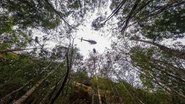 Firefighters save endangered Wollemi pines