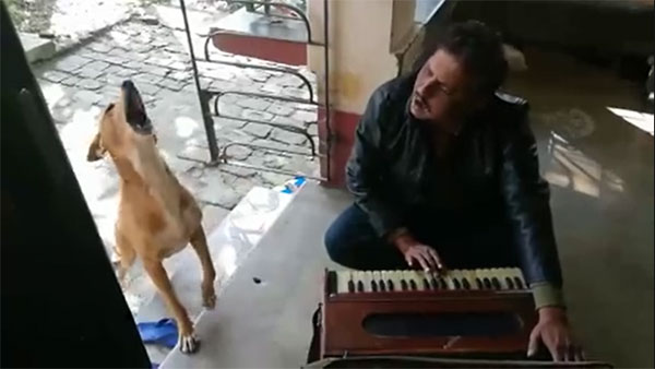 Talented dog 'Bagha' sings Ranu Mondal's song, video viewed 2M times