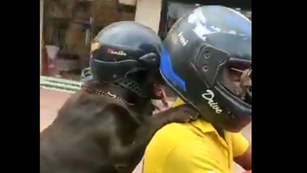 WATCH: Dog wearing helmet for safety in Chennai