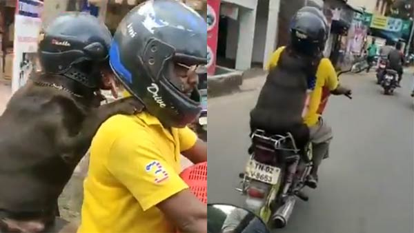 Dog wears helmet, rides behind its hooman in Chennai; Internet divided over this viral video
