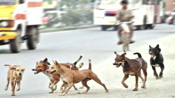 Rabid dog goes on rampage in Hyderabad attacks 18 passers-by