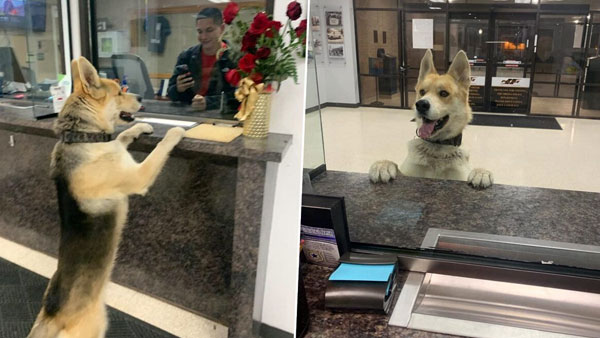 Adorable lost Dog walks into local police station to report himself missing, then returns home