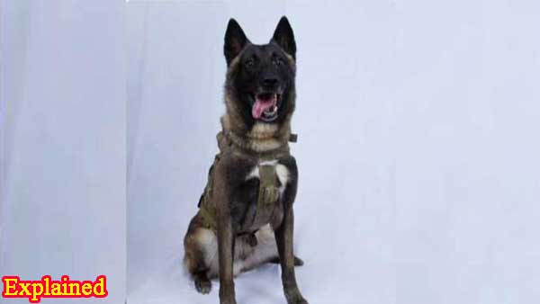 Explained:Why is Kolkata police inducting Belgian Malinois that helped killed Bin Laden and Baghdadi