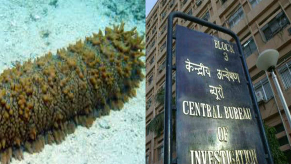 Smuggling of sea cucumbers to China: CBI takes over probe