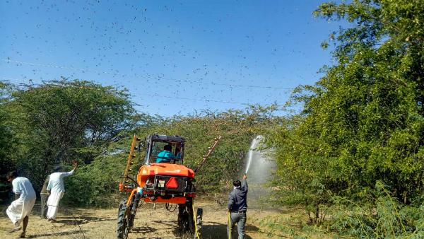 Locusts attack crops in Western MP