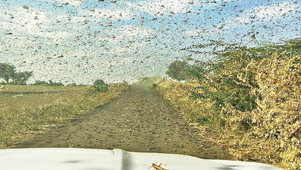 In a first drones used to drive away locusts in Rajasthan