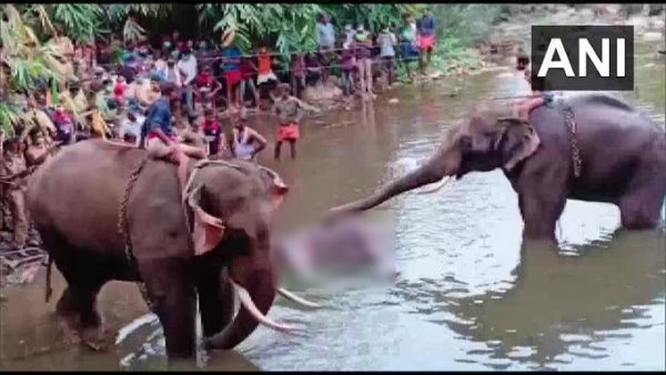 Death of pregnant elephant: FIR against unidentified persons ...