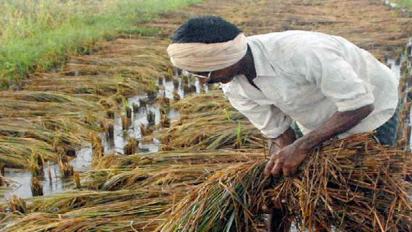 Centre hikes MSP for 14 Kharif crops