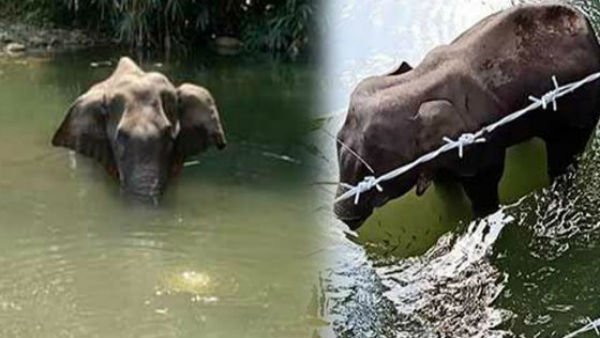 Kerala: Post-mortem report says pregnant elephant couldn't eat or drink for 2 weeks before her death