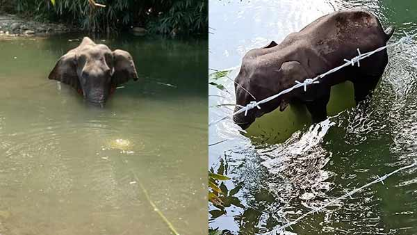 Death of pregnant elephant: What Forest Minister Javdekar says about the cruel act