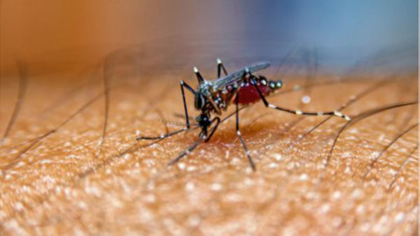 Russia warns of West Nile Virus: All you need to know