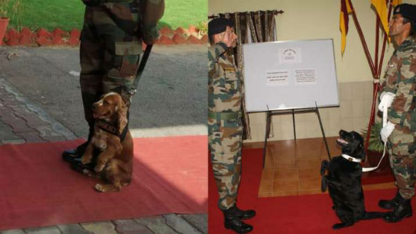 Meet Vida and Sophie, Army dogs: PM Modi hails Army dogs, says Indian breeds are very good