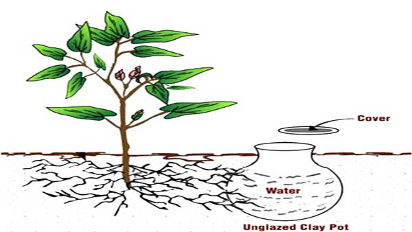 This is the method, PM Modi would use to plant the Parijat sapling in Ayodhya