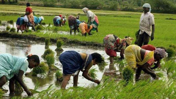 Govt launches e-booklet highlighting success stories of farmers benefitting from new agri laws