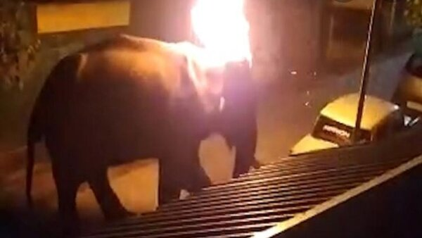 Wish to be born in a world without humans: Netizens fire up over death of TN elephant