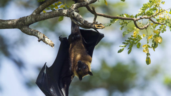 Coronavirus jumped from bats to humans with 'very little change', say scientists