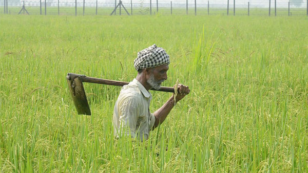 UP: Farmers destroy crops