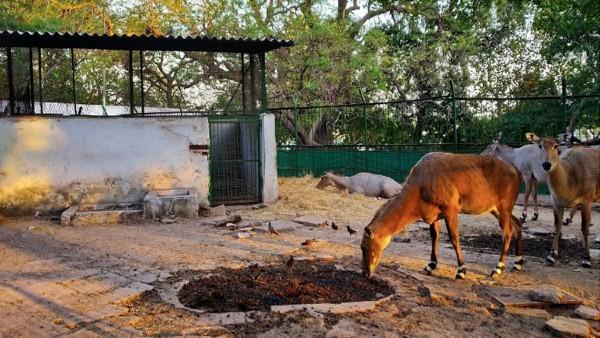 COVID-19: Ahmedabad zoo, lakefront, gardens closed