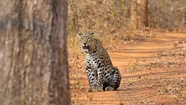 Two leopards found dead in Uttarakhand
