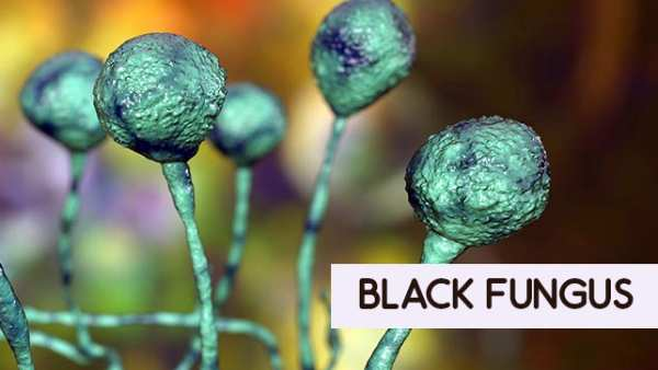 Mucormycosis: 52 people died due to Black fungus in Maharashtra so far
