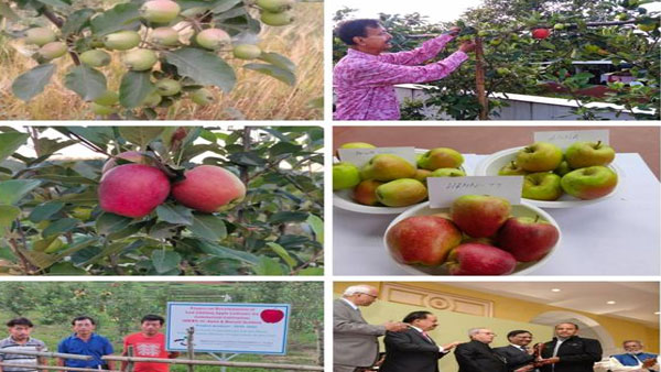 Himachal farmer develops low chilling apple variety