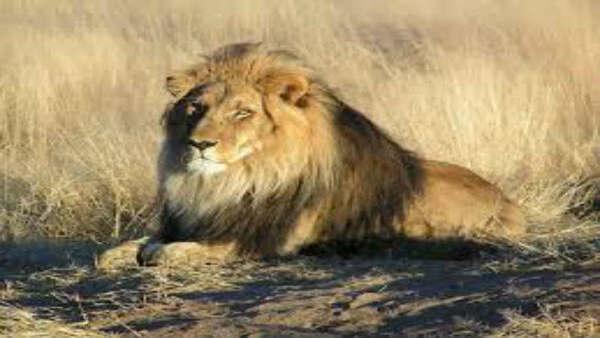 7-year-old lion dies at Delhi zoo