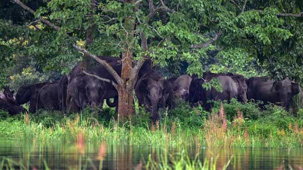Tamil Nadu: 28 elephants at Mudumalai Tiger Reserve tested for COVID-19