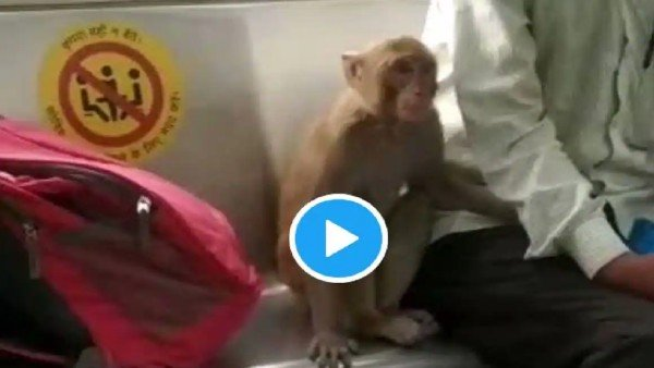 Viral video: Monkey seen travelling with passengers inside Delhi Metro coaches