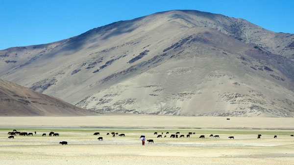 Did you know cold dessert Ladakh experienced active flooding