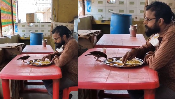 Emotional video of man and bird eating from the same plate goes viral