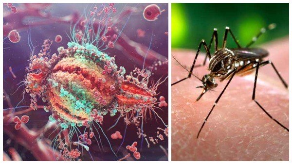Zika virus: Central team dispatched to Kerala