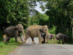Are You Helpless Sc Asks Govt On Elephant Corridors