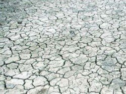 Ap Cm Declares War On Drought As Dry Spell Hits 4 Districts