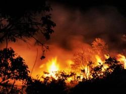 Massive Forest Fires Portugal Kill