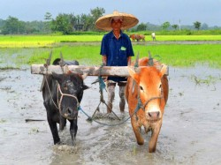 In Militancy Hit Manipur Farmers Adopt Latest Technology S